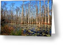 South Carolina Swamps Greeting Card