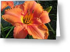 South Seas Daylily Greeting Card