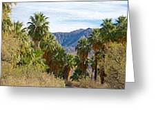 South Side View Of Andreas Canyon Trail In Indian Canyons-ca Greeting Card