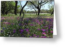 South Texas Meadow Greeting Card