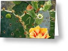 South Texas Prickly Pear Greeting Card