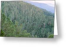 Southeast Forest Ridges Greeting Card
