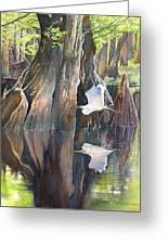 Southeast Missouri Swamp Greeting Card