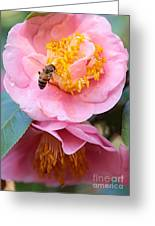 Southern Bee Greeting Card