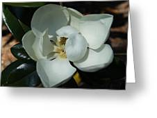 Southern Bell I Greeting Card