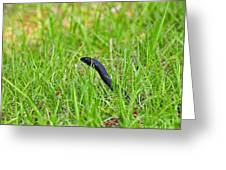 Southern Black Racer Greeting Card by Al Powell Photography USA
