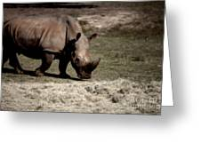 Southern Black Rhino Greeting Card