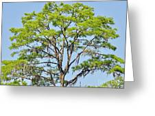 Southern Cypress Greeting Card