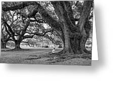 Southern Dreamer Bw Greeting Card