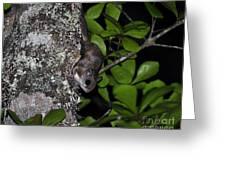 Southern Flying Squirrel Greeting Card