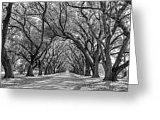 Southern Journey Bw Greeting Card
