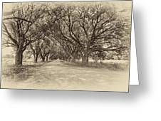 Southern Journey Sepia Greeting Card