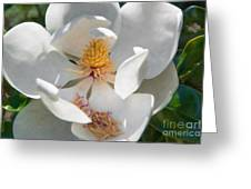 Southern Magnolia Blossom Greeting Card