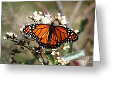 Southern Monarch Butterfly Greeting Card