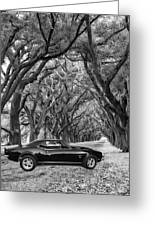 Southern Muscle Greeting Card