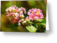 Southern Myrtle Greeting Card