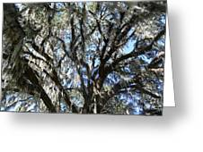 Southern Perspective - Mossy Live Oak Greeting Card