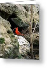 Southern Red Bird By The Flint River Greeting Card