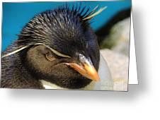 Southern Rock Hopper Penguin Greeting Card