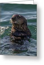 Southern Sea Otter 2 Greeting Card