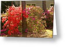 Southern Spring Color Greeting Card