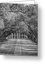 Southern Time Travel Bw Greeting Card