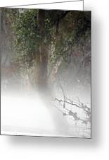 Southern Trees Have Curves Greeting Card
