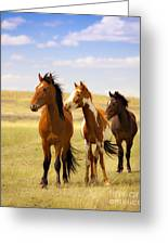 Southwest Wild Horses On Navajo Indian Reservation Greeting Card