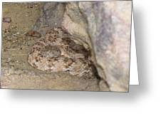 Southwestern Speckled Rattlesnake Greeting Card