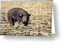 Sow In The Field Greeting Card