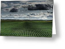 Soy Beans Greeting Card