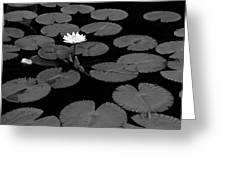 Space Lily Greeting Card