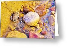 Spadefoot Toad Near Stones On Capitol Gorge Pioneer Trail In Capitol Reef National Park-utah Greeting Card