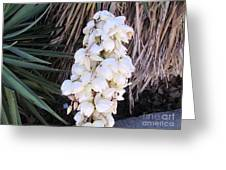 Spain Flowers Greeting Card