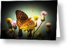Spangled Fritillary Greeting Card