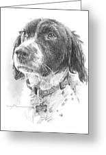 Spaniel Dog Pencil Portrait Greeting Card