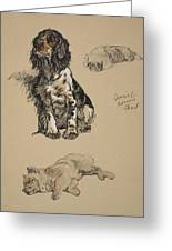 Spaniel, Pekinese And Chow, 1930 Greeting Card