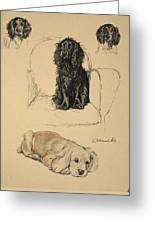Spaniels, 1930, Illustrations Greeting Card by Cecil Charles Windsor Aldin