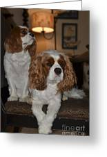 Spaniels Greeting Card