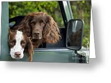 Spaniels In Car Greeting Card