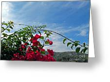 Spanish Bougainvillea Greeting Card