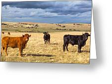 Spanish Bulls Greeting Card