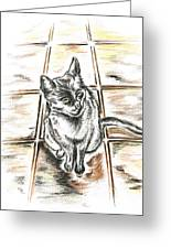 Spanish Cat Waiting Greeting Card