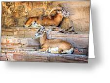 Spanish Ibex Greeting Card