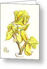 Spanish Irises Greeting Card