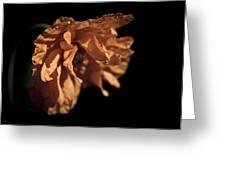 Spanish Poppy Greeting Card