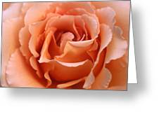 Spanish  Rose Greeting Card