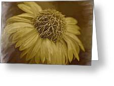 Sparkling Daisy Greeting Card