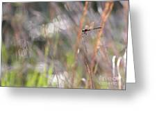 Sparkling Morning Sunshine With Dragonfly Greeting Card