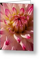 Sparkling Pink Dahlia Greeting Card